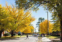 Gingko trees and fall foliage<br />  (photo by Marco Lopez / &copy; Mississippi State University)