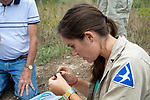 Becca Settele Processing Diamondback Turtle