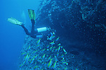 Mayotte est un paradis pour les plongeurs.