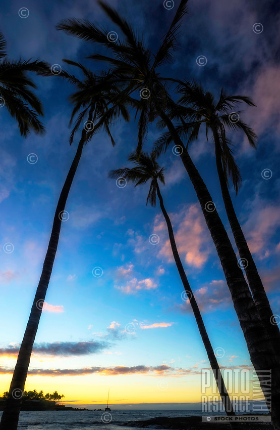 Tall palm trees extend into the sky and frame the sunset, seen from the Mauna Lani resort beach, Big Island.