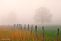 Fence and trees in foggy meadow<br /> Cades Cove<br /> Great Smoky Mountains N.P. TN