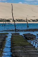 France, Gironde (33), bassin d'Arcachon, réserve naturelle du Banc d'Arguin, Sur les parcs à Huitres, en fond la Dune du Pyla  // France, Gironde, Bassin d'Arcachon, Banc d'Arguin Natural Reserve, Bed oysters, Dune du Pyla in background