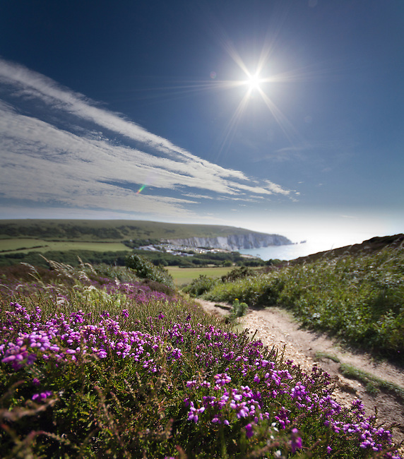 Heather in bloom on Headon Warren looking towards Alum Bay and the Needles, Isle of Wight.<br />