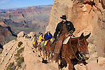 Horseback riders on South Kaibab Trail