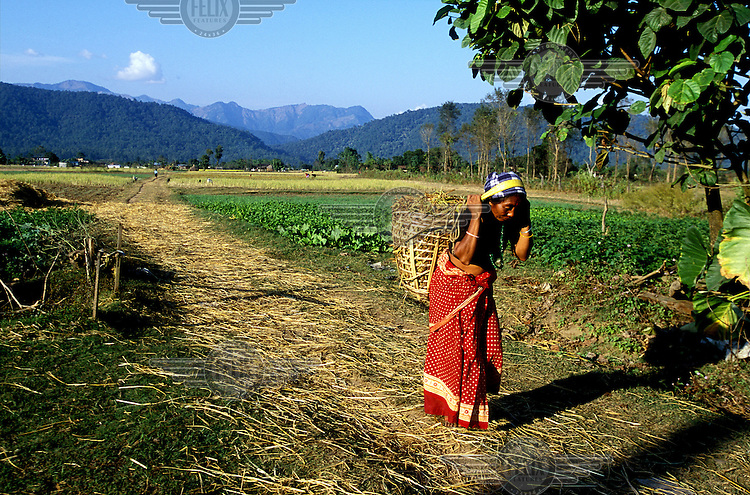 Female agricultural labourer carrying a basket of newly-harvested straw.  Women in the region share farm labour with men, though often perform the more menial tasks.  Over 80% of the Nepali population work in agriculture.