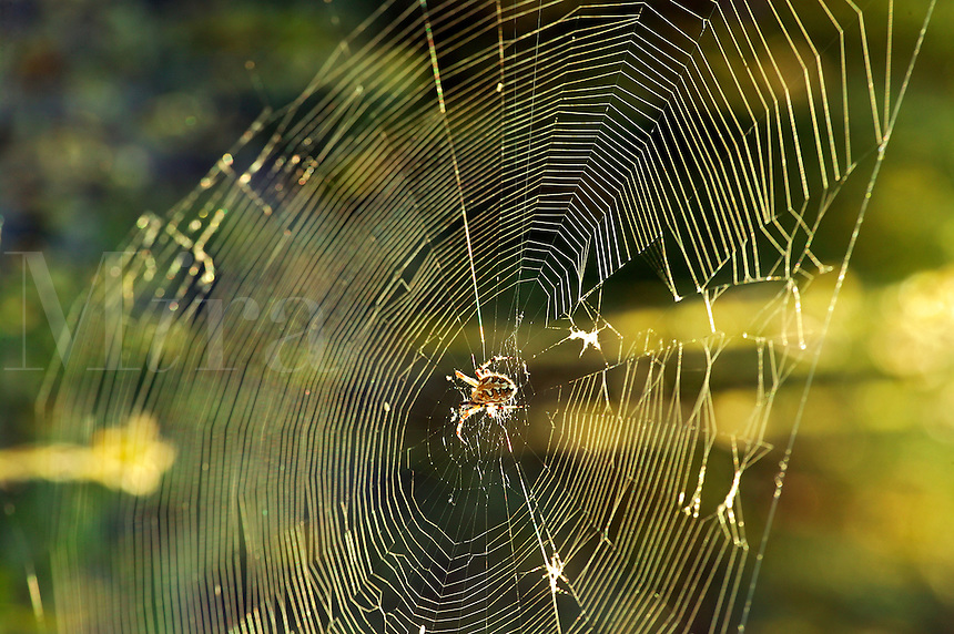 A spider in a web along Christmas Tree Pass road Lake Mead Recreation Area, near Laughlin, Nevada