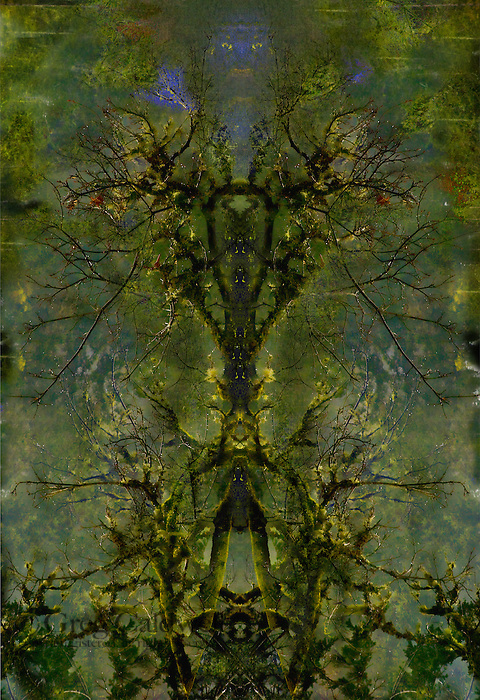 The montage images in this gallery are all a homage to Emily Carr. The assets for these images are carefully chosen from Northwest coastal forests and assembled to create a feeling of mystery and emotion.