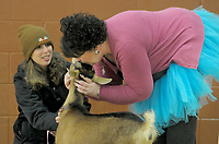 NWA Democrat-Gazette/DAVID GOTTSCHALK Claire Mitchell (left) holds Zelda, Wednesday, November 28, 2018, as the goat receives a kiss from Ruth Mobley, assistant principal at Washington Elementary School, during an assembly at the school in Fayetteville. The kissing of the goat was a reward to the student body for collecting over 500 boxes of macaroni and cheese for the Northwest Arkansas Food Bank. Mobley and Ashley McLarty, principal, both kissed Zelda.