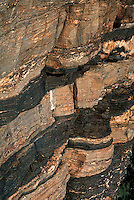 METAMORPHIC ROCK STRATA<br /> Folded Gneiss Patterns<br /> Paleozoic Hartland Formation