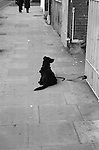 Black Dog on Pavement