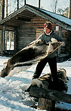 SWEDEN, Swedish Lapland, Girl Shaking a Deer Skin outside