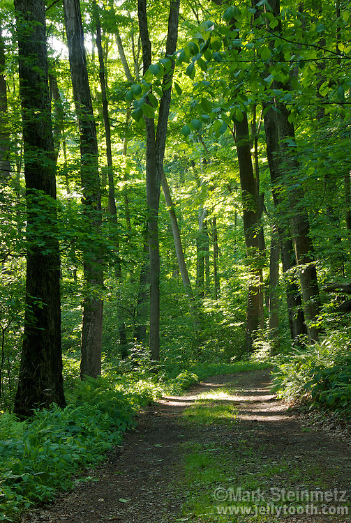 Sun-dappled trail through a mature temperate hardwood forest in mid-May, Shades State Park, Indiana, USA