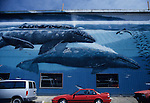 Historic Bay front painted murals on the side of buildings whales swimming with cars parked along street Newport Oregon State USA