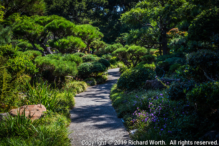 A walk on the quiet side is offered visitors to the Japanese Garden in Hayward, California.