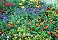 "63821-08612 French Marigold (Tagetes patula), Blue Victoria Salvia (Salvia farinacea), Nicotiana (Nicotiana alata ""Domino Red""), Tall Garden Phlox (Phlox paniculata), Black-eyed Susans (Rudbeckia hirta ""Indian Summer""), Million Gold Melampodium (Melampodium sp. ""Million Gold""), Russian Sage (Perovskia atripilicifolia), Violas (Viola sp), Parsley (Petroselinum crispum) in flower garden, Marion Co., IL"