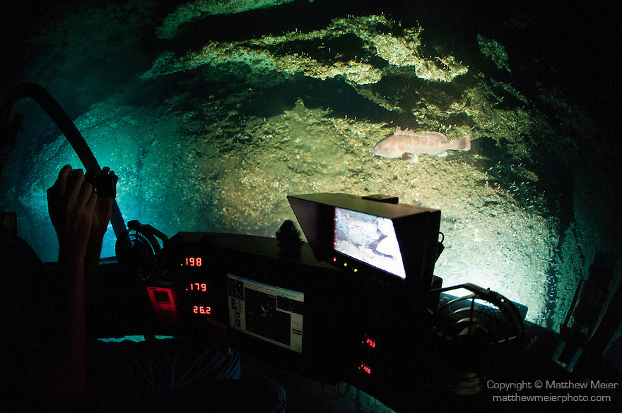 Cocos Island, Costa Rica; a grouper fish is visible through the acrylic dome of the DeepSee submarine, while making our descent down the wall from a depth of 600 feet to 1000 feet
