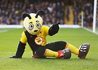 1st February 2020; Vicarage Road, Watford, Hertfordshire, England; English Premier League Football, Watford versus Everton; Harry the Hornet entertaining the fans