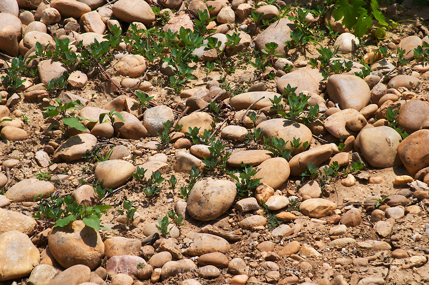 soil detail with galets roules chateauneuf du pape rhone france