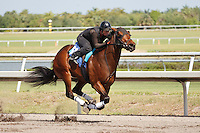 #68Fasig-Tipton Florida Sale,Under Tack Show. Palm Meadows Florida 03-23-2012 Arron Haggart/Eclipse Sportswire.