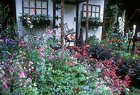 "Dream cottage garden, with ""cat"" on rocker. Heuchera coralbells in bloom, Geraniums, Digitalis foxgloves for tall vertical, purple Heuchera in bloom, sweetpeas, red Pelargoniums, old rustic broom, windowboxes, colorful riot of many different kinds of flowering plants. Design: Carole Nottage. Digitalis purpurea. Lush flower garden, windowboxes, charming"