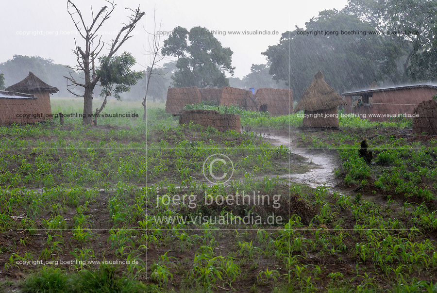 BURKINA FASO, Province Poni, Gaoua, , village and maize field in raining season / Dorf und Maisfeld in der Regenzeit