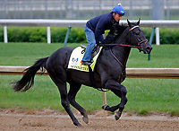 LOUISVILLE, KENTUCKY - APRIL 30: Sonneteer, owned by Calumet Farm and trained by Keith Desormeaux, exercises in preparation for the Kentucky Derby at Churchill Downs on April 30, 2017 in Louisville, Kentucky. (Photo by Jon Durr/Eclipse Sportswire/Getty Images)