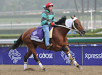 Calidoscopio, trained by G. Frankel, exercises in preparation for the upcoming Breeders Cup at Santa Anita Park on November 1, 2012.