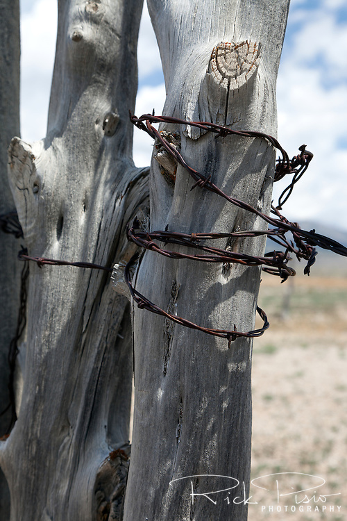 Fence post and barbed wire in eastern Nevada.