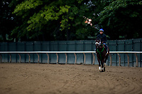 ELMONT, NY - JUNE 07: Bravazo gallops in preparation for the 150th Belmont Stakes at Belmont Park on June 07, 2018 in Elmont, New York. (Photo by Alex Evers/Eclipse Sportswire/Getty Images)