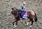 October 31, 2019: Breeders' Cup Juvenile Turf entrant Fort Myers, trained by Aidan P. O'Brien, exercises in preparation for the Breeders' Cup World Championships at Santa Anita Park in Arcadia, California on October 31, 2019. John Voorhees/Eclipse Sportswire/Breeders' Cup/CSM