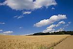 Europa, DEU, Deutschland, Nordrhein Westfalen, NRW, Ruhrgebiet, Ruhrtal, Essen, Agrarlandschaft, Feld, Acker, Getreide, Anbau, Gerste, Himmel, Cumuluswolken, Kategorien und Themen, Landwirtschaft, Landwirtschaftlich, Agrar, Agrarwirtschaft, Erzeugung, Landwirtschaftliche Produkte, Natur, Naturfoto, Naturfotos, Naturfotografie, Naturphoto, Naturphotographie, Landschaft, Landschaften, Landschaftsfoto, Landschaftsfotografie, Landschaftsphoto, Landschaftsphotographie......[Fuer die Nutzung gelten die jeweils gueltigen Allgemeinen Liefer-und Geschaeftsbedingungen. Nutzung nur gegen Verwendungsmeldung und Nachweis. Download der AGB unter http://www.image-box.com oder werden auf Anfrage zugesendet. Freigabe ist vorher erforderlich. Jede Nutzung des Fotos ist honorarpflichtig gemaess derzeit gueltiger MFM Liste - Kontakt, Uwe Schmid-Fotografie, Duisburg, Tel. (+49).2065.677997, ..archiv@image-box.com, www.image-box.com]