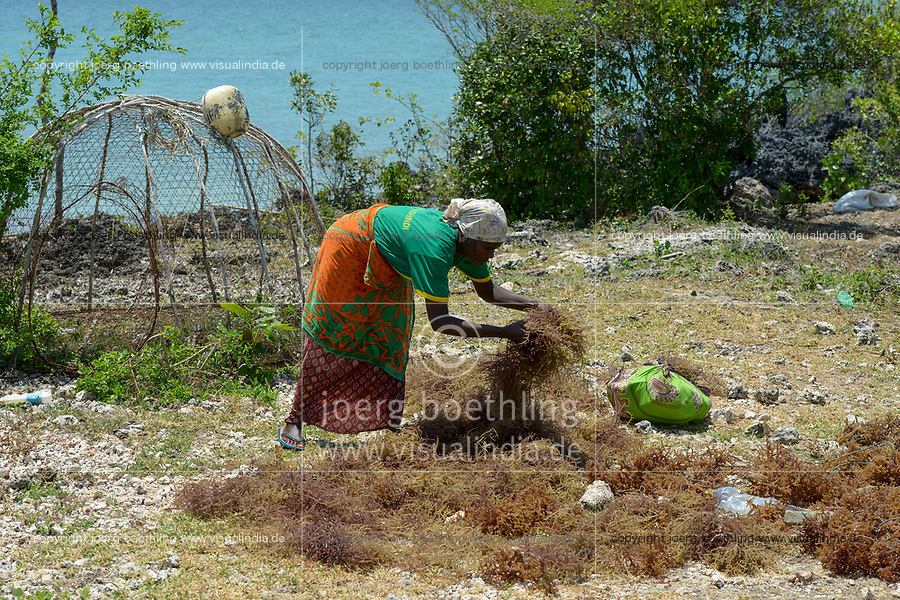 TANZANIA, Zanzibar, due to climate change and rising water temperatures seaweed farmer have shifted to plant red algae farming in deep water, woman drying harvested algae in the sun