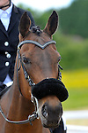 06/06/2015 - Class 6 - 80cm - Unaffiliated showjumping - Brook Farm Training Centre