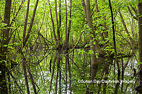 63895-15101 Swamp along Snake Road LaRue Pine Hills Otter Pond Natural Area Shawnee National Forest Union Co. IL