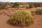 The Desert landscape and foliage of Canyonlands National Park, Utah, USA