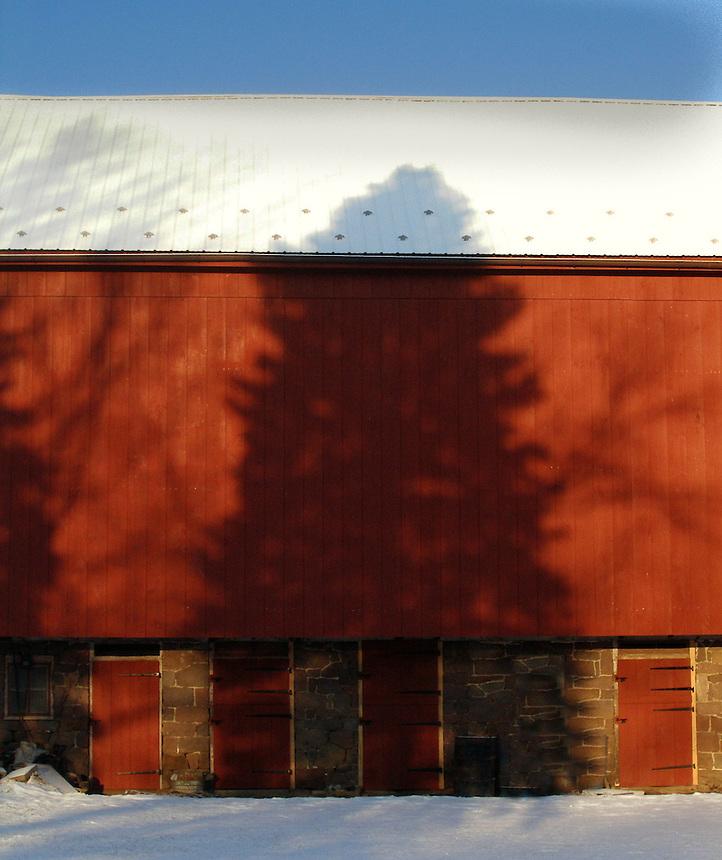 Tree Shadow on Barn