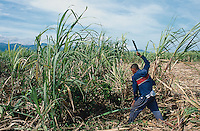 Philippines. Negros Island. Province of Negros Occidental, located in the  Western Visayas region. Barangay (village) Moises Padilla. Sugar cane fields.  A worker is cutting with his machete the sugar canes ready for harvest. © 1999 Didier Ruef