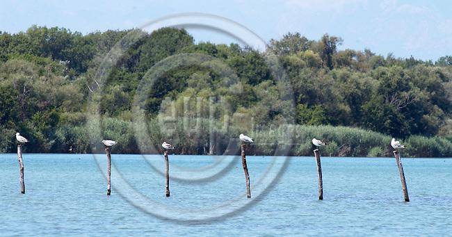 Velipoje/Velipoja-Shkodra/Shkoder-Albania - August 07, 2004---Sea birds in the laguna of the delta / Buna river, in the Natural Reservation / Park of Velipoja; project area of GTZ-Wiram-Albania (German Technical Cooperation, Deutsche Gesellschaft fuer Technische Zusammenarbeit (GTZ) GmbH); nature-landscape-environment---Photo: Horst Wagner/eup-images