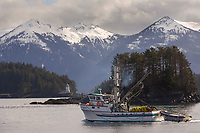 Commercial fishing vessel, purse seiner in Sitka Channel passes by the Rockwell Lighthouse, southeast, Alaska