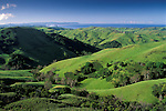 Rolling green grass field pasture hills of the Central Coast in spring overlooking the Pacific Ocean, near Cambria, California