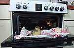 Pictured:  The duckling in front of the oven which it hatched in.<br /> <br /> A couple have become the unexpected owners of a duckling after finding an abandoned egg - and hatching it in their oven.  Heartwarming photographs and videos show the days-old duckling following Will Hall and Alice Kendall around their home after they rescued it, even 'terrifying' their big German pointer, Meg.<br /> <br /> Mr Hall, a teacher at leading independent school Winchester College, discovered the duck egg while out walking in a grassy area on Saturday and couldn't find its nest.  Not wanting to leave the egg, the 26 year old FaceTimed his events coordinator partner and the pair hatched a plan to save it.<br /> <br /> Miss Kendall, 22, preheated the oven at their home in Winchester, Hants, ready for their arrival, setting up a makeshift incubator by placing a tea towel on a baking tray.  SEE OUR COPY FOR DETAILS.<br /> <br /> © Simon Czapp/Solent News & Photo Agency<br /> UK +44 (0) 2380 458800