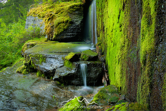 Idaho, North, Wallace, Avery. Road side green mossy rocks and a small falls on Moon Pass in the St. Joe National forest of the Bitterroot Mountains.