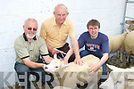 CHECKING: Gordon Nicholson with Neilus and Niall Groves checking out the sheep at the Kingdom County Fair at Ballybeggan on Sunday.   Copyright Kerry's Eye 2008