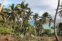 Palm trees at the Mirador de la Ballenas, a whale watching viewpoint at Punta Balandra, near Samana, in the Dominican Republic, in the Caribbean. At this point on the coast there is an observatory. Picture by Manuel Cohen