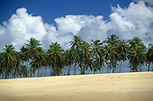 Costa Verde (Coconut coast), Brazil. Golden unspoilt beach with line of palm trees and blue sky with white clouds; Bahia State.