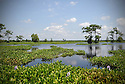 Wetlands in Louisiana.