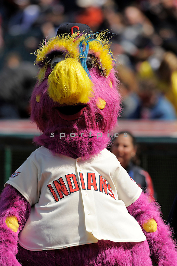 SLIDER the Mascot of the Cleveland Indians , in action  during the Indians game against the Toronto Blue Jays  on April 11, 2009 in Cleveland, Ohio  The Blue Jays beat  the Indians 5-4.