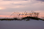 A beautiful Florida sunset with Sea oats atop a white sand dune in the foreground on an exotic beach.