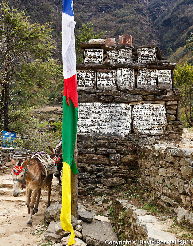 A donkey train passes by mani stones and prayer flags on the trail to Everest Base Camp.