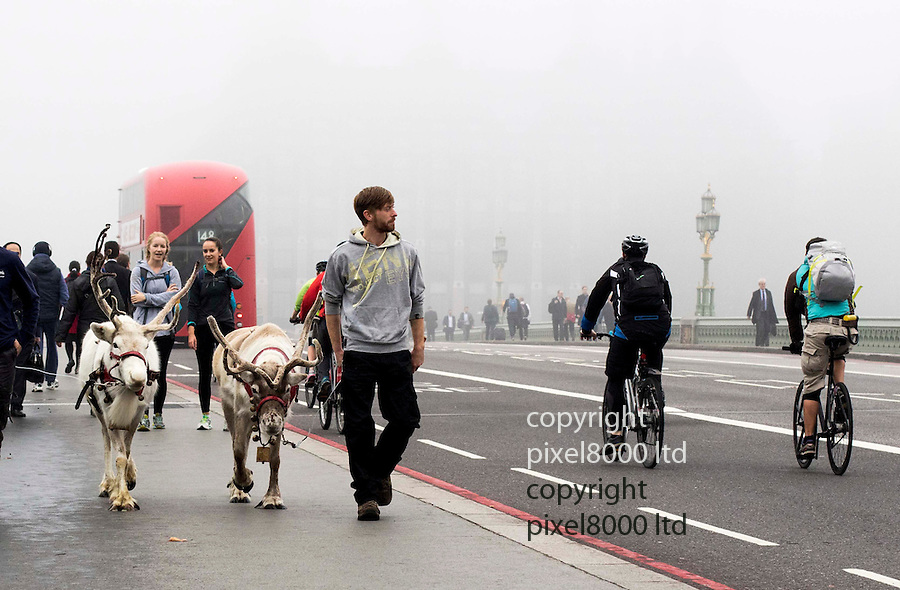Pic shows: Fog hits UK<br /> <br /> Reindeer seen crossing Westminster Bridge<br /> <br /> <br /> <br /> <br /> Pic by Gavin Rodgers/Pixel 8000 Ltd
